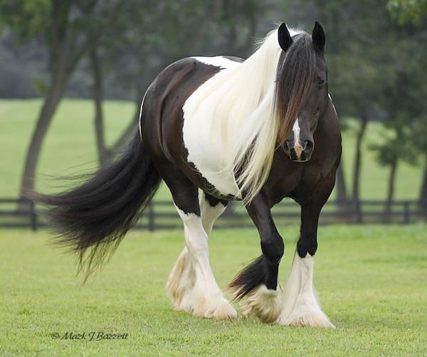 curiozitati de cai